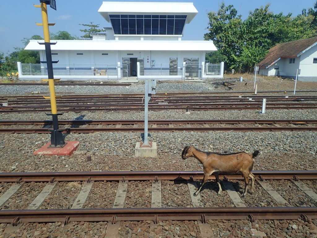 Train, Java