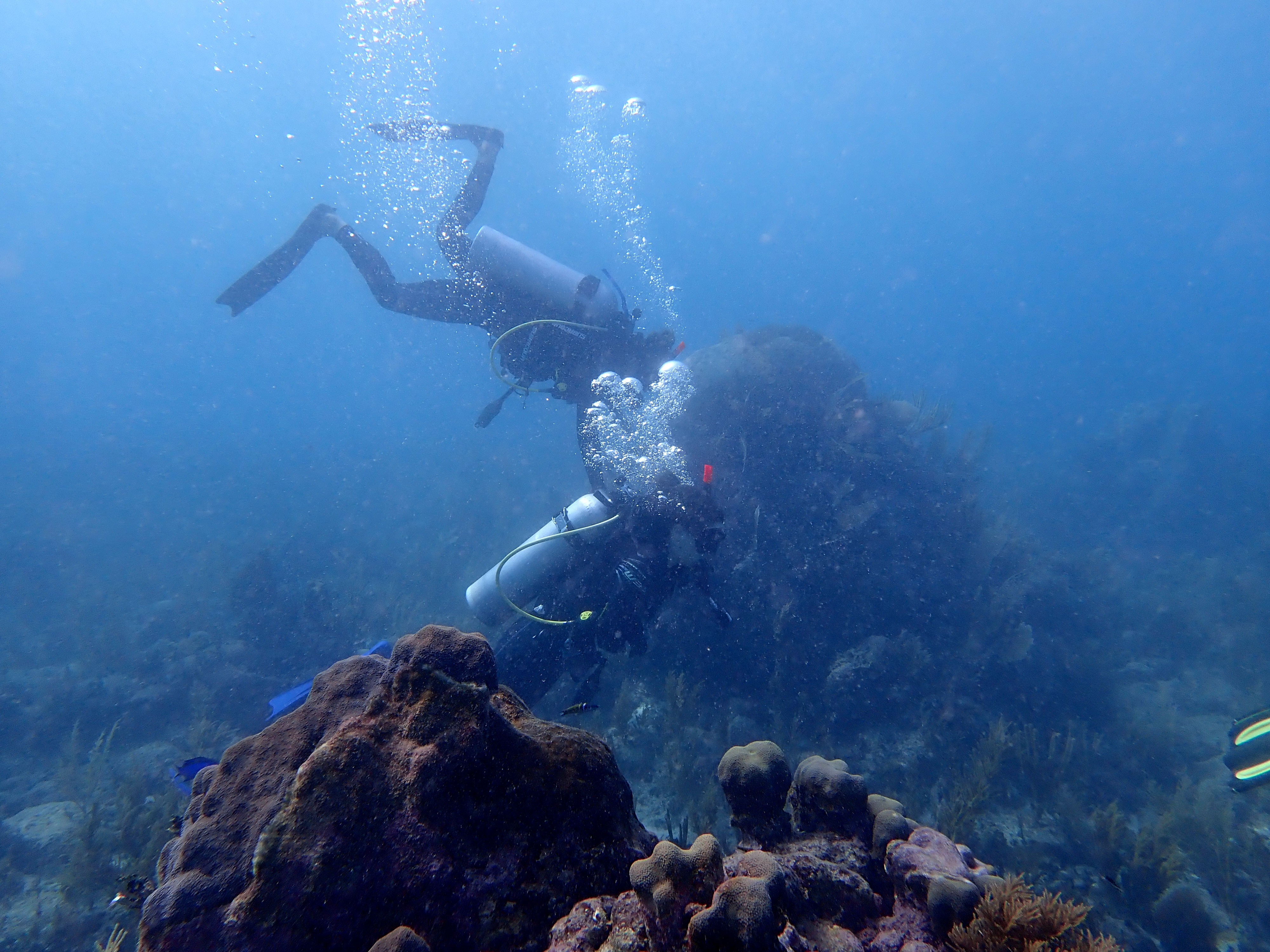 Visit the underwater world: scuba diving certification