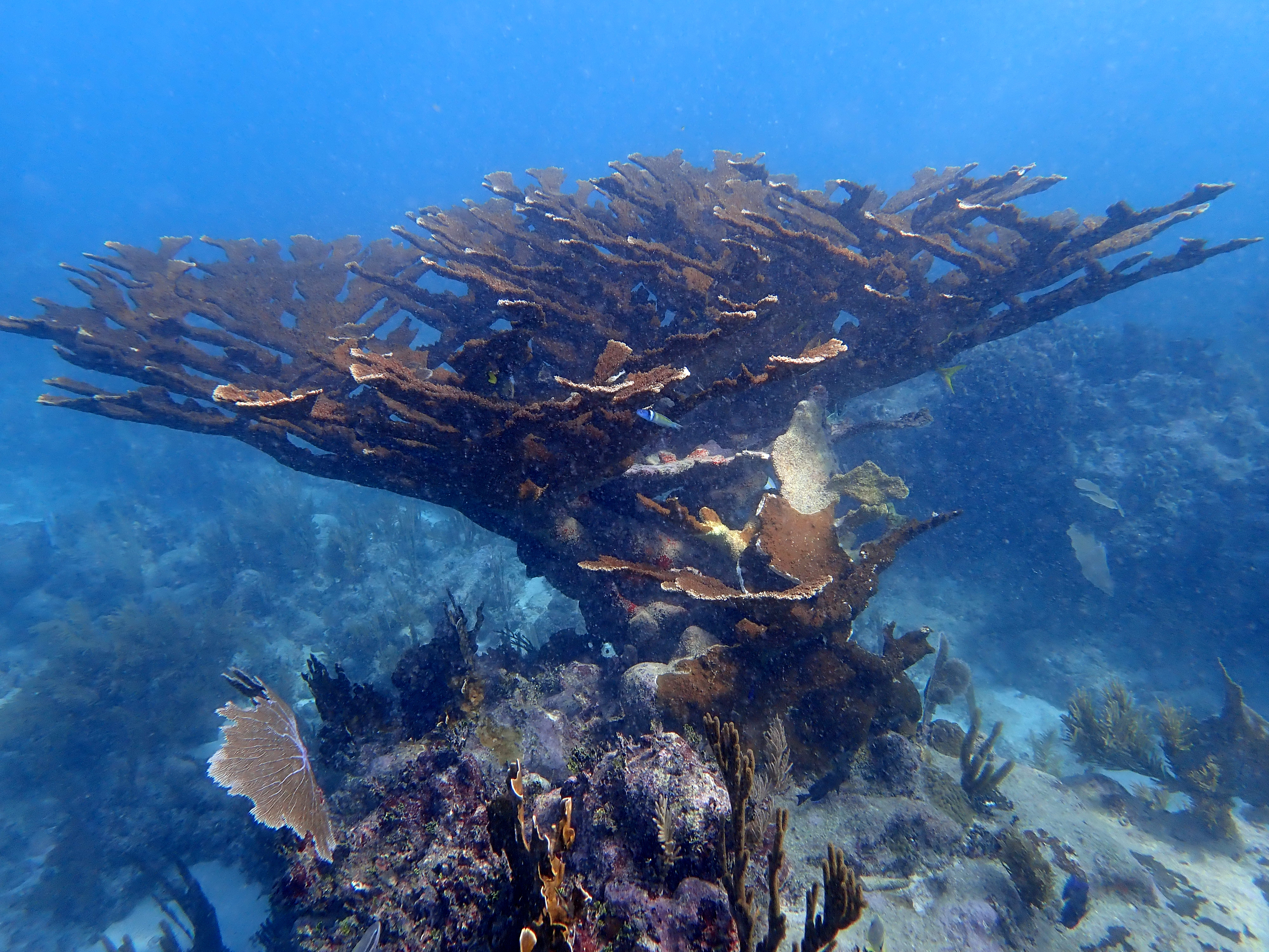 Visit the underwater world: scuba diving certification / PADI Open Water